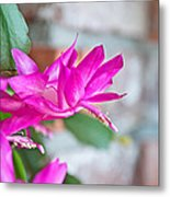 Hot Pink Christmas Cactus Flower Art Prints Metal Print