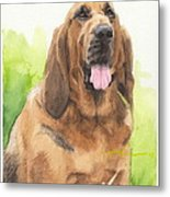 Hound Dog Watercolor Portrait Metal Print