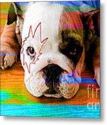House Broken Bulldog Puppy Metal Print
