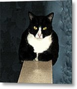 House Cat Metal Print