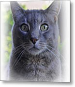 House Cat Stare Metal Print