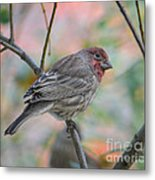 House Finch In Autumn Metal Print