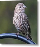 House Finch Metal Print by John Kunze