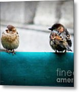 House Sparrows Metal Print