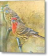 Housefinch Pair With Texture Metal Print