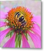 Hover Fly On Purple Coneflower Metal Print