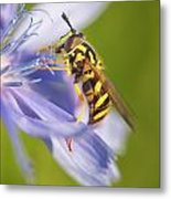 Hover Fly Metal Print by Todd Bielby