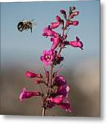 Hovering Bee Metal Print