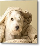 How About A Snuggle Card Metal Print