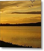 How Many Birds Can You Count? Metal Print