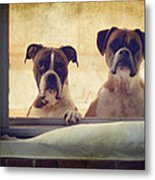 How Much Is That Doggie In The Window? Metal Print