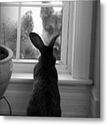 How Much Is The Doggie In The Window? Metal Print
