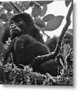 Howler Monkey's Metal Print