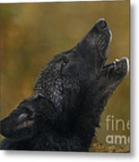 Howling Gray Wolf Pup Endangered Species Wildlife Rescue Metal Print