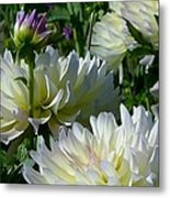 Hues Of Softness Dahlia Metal Print
