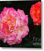 Huge Pink And White Rose...   # Metal Print