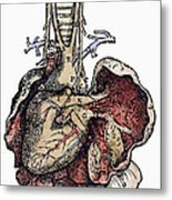 Human Heart, 1543 Metal Print
