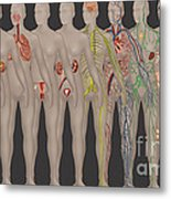 Human Systems In The Female Anatomy Metal Print