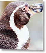 Humboldt Penguin Portrait Metal Print
