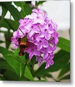 Humingbird Moth Metal Print