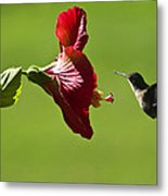 Hummer At The Hibiscus Metal Print
