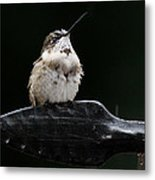 Hummer In The Rain II Metal Print
