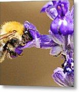 Humming Bee  Metal Print