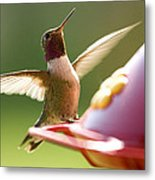 Humming Bird 2 Metal Print