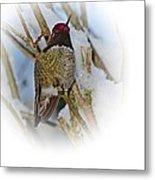 Humming Bird And Snow 4 Metal Print