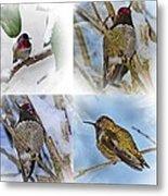 Humming Bird And Snow 4 Pack Metal Print