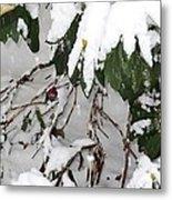 Humming Bird And Snow Metal Print