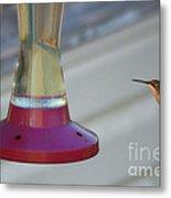 Humming Bird Approaching Metal Print