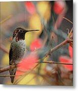Humming Bird Christmas Metal Print