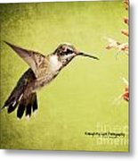 Humming Bird In Flight Metal Print