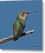 Humming Bird On A Stick Metal Print