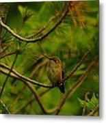 Humming Birds Perched  Metal Print