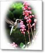 Hummingbird 2 Metal Print