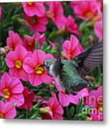 Hummingbird 3219 Metal Print