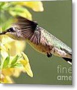 Hummingbird 3725 Metal Print
