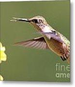 Hummingbird 3733 Metal Print