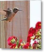 Hummingbird 4533 Metal Print