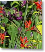 Hummingbird And Crocosmia Lucifer Metal Print