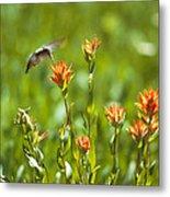 Hummingbird And Paintbrush Flower Metal Print