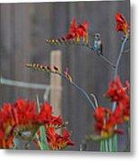 Hummingbird At Rest Metal Print