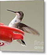 Hummingbird At The Feeder Metal Print