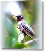 Hummingbird - Beautiful Metal Print