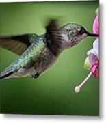 Hummingbird Carbs Metal Print