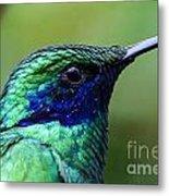 Hummingbird Closeup Metal Print