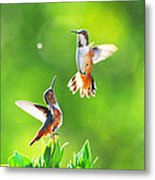Hummingbird Dance  Metal Print