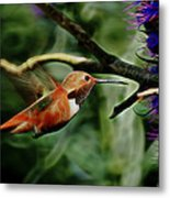 Hummingbird Dreams Digital Art Metal Print